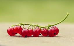 Oruga de la fruta Fotografía de archivo libre de regalías