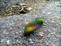 oruga de turbo único colorante del otoño Vida en colores Fotos de archivo libres de regalías