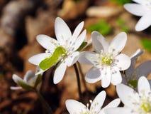 Oruga en un wildflower Foto de archivo