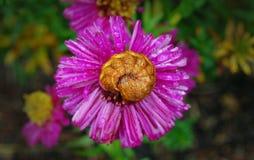 Oruga que duerme en la flor Fotografía de archivo libre de regalías