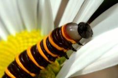 Oruga y flor Fotografía de archivo libre de regalías