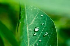 Orvalhe nas folhas após a chuva com luz da manhã Imagem de Stock