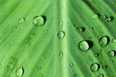Orvalhe nas folhas após a chuva com luz da manhã Fotos de Stock Royalty Free