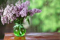 Orvalho azul pequeno das flores selvagens Imagens de Stock Royalty Free