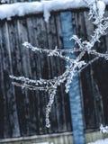 Orvalho congelado em ramos imagem de stock royalty free