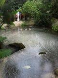 Orvalho da lagoa Imagens de Stock Royalty Free
