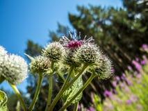 Orvalho da manhã em flores imagens de stock royalty free