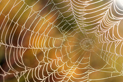 Orvalho da manhã em um Web Foto de Stock
