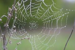 Orvalho da manhã em um Web de aranha Foto de Stock Royalty Free
