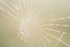 Orvalho da manhã em um Web de aranha Fotografia de Stock Royalty Free