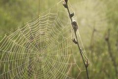 Orvalho da manhã em um Web de aranha Foto de Stock