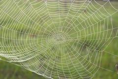 Orvalho da manhã em um Web de aranha Imagem de Stock Royalty Free