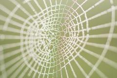 Orvalho da manhã em um Web de aranha Imagens de Stock Royalty Free