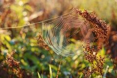 Orvalho da manhã em uma Web de aranha no sol Fotografia de Stock Royalty Free