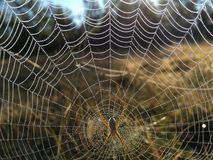 Orvalho da manhã na Web de aranhas Foto de Stock Royalty Free