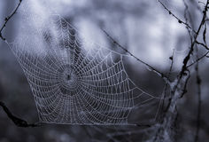 Orvalho da manhã no Web de aranha Fotos de Stock Royalty Free