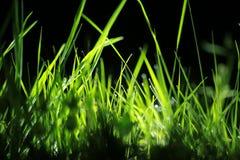 Orvalho da noite na grama Imagens de Stock