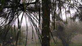Orvalho em árvores Imagem de Stock Royalty Free