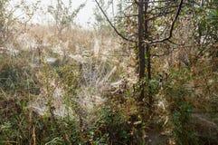 Orvalho enevoado da manhã no prado da floresta da montanha foto de stock
