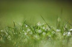 Orvalho fresco da manhã na grama da mola fotos de stock royalty free