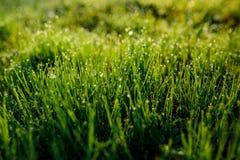 Orvalho fresco da manhã na grama da mola, fundo natural - ascendente próximo Fotos de Stock
