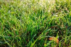 Orvalho fresco da manhã na grama da mola, fundo natural - ascendente próximo Imagem de Stock Royalty Free