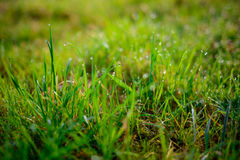Orvalho fresco da manhã na grama da mola, fundo natural - ascendente próximo Fotos de Stock Royalty Free