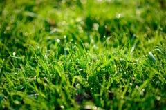 Orvalho fresco da manhã na grama da mola, fundo natural - ascendente próximo Fotografia de Stock
