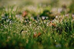 Orvalho fresco da manhã na grama da mola, fundo natural - ascendente próximo Imagem de Stock