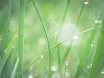 Orvalho fresco na grama da manhã Foto de Stock