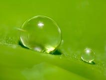 Orvalho muito pequeno na folha verde com gotas da água Fotografia de Stock Royalty Free