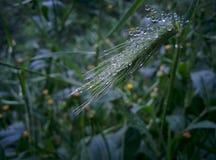 Orvalho na flor Fotografia de Stock