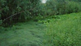 Orvalho na grama filme