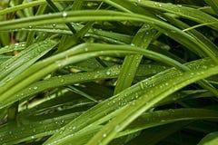 Orvalho na grama Imagens de Stock