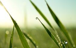 Orvalho na grama Foto de Stock