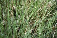 Orvalho na grama Fotos de Stock