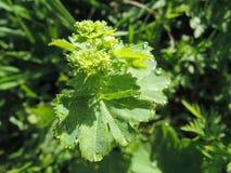 Orvalho nas folhas Foto de Stock