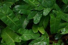 Orvalho nas folhas ap?s a chuva imagem de stock