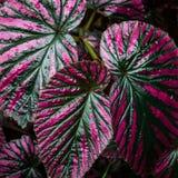 Orvalho nas folhas - close-up imagens de stock