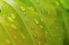 Orvalho nas folhas da samambaia Foto de Stock Royalty Free