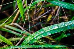 Orvalho no close up da grama Imagens de Stock