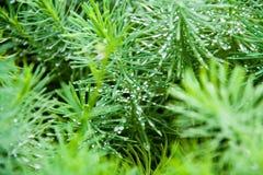 orvalho no macro verde Fotos de Stock Royalty Free