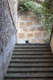 Orvieto Umbria, Italy, cat and steps Stock Images