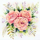 Oryginalna akwarela - trzy różowej róży z liśćmi na białym tle ilustracji