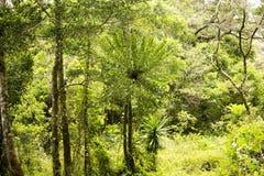 Oryginalny lasowy siedlisko, Złocisty Halny park narodowy, Zdjęcia Stock
