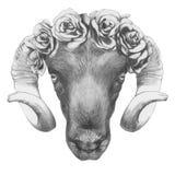 Oryginalny rysunek baran z różami ilustracji
