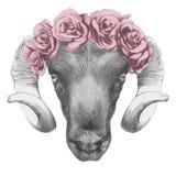Oryginalny rysunek baran z różami Zdjęcia Stock