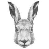 Oryginalny rysunek królik ilustracja wektor