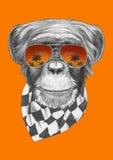 Oryginalny rysunek małpa z szalikiem i okularami przeciwsłonecznymi ilustracji