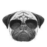 Oryginalny rysunek mopsa pies z okularami przeciwsłonecznymi ilustracji